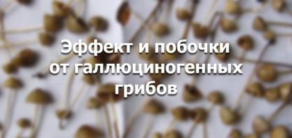 Эффект от псилоцибиновых грибов