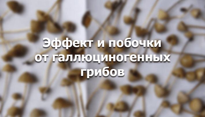 Конопля отзывы Бийск Stuff Продажа Барнаул